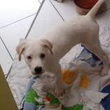 El_Inka avatar