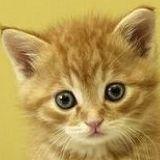 batpen2006 avatar