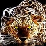 tomasalbarenque2014 avatar
