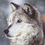 Mentos360 avatar