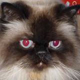 puyallupdon avatar
