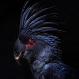 nice_mimitos avatar