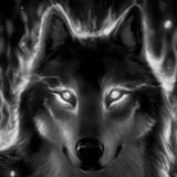 Deathwolf1234 avatar