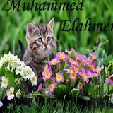 Muhammed avatar