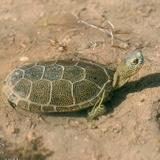 gabrielo1203 avatar