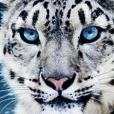 cdragon1983 avatar