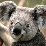 BigDOtis avatar