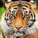 creed_39 avatar