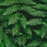mil_da avatar