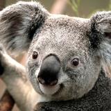 kazoun avatar