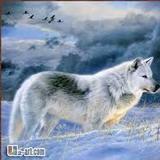 wolver avatar