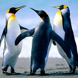 emiliofloresvald5435 avatar