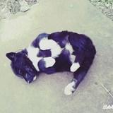 PRO_TURK avatar