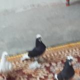 iraq4mahdi avatar