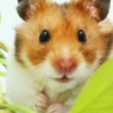 Sanija avatar