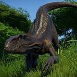 Indorapter avatar