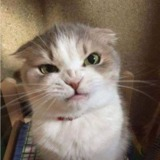 Angry_Cat avatar