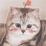 taokod avatar