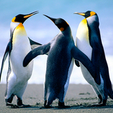 fatemahabu-alamir.tzafonet.org.il avatar