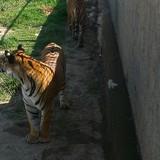 amarhaji12345 avatar