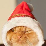 Da_vashe_dikiy avatar