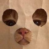 JBlock avatar