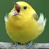 Birdie avatar