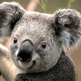 bac_vinh1234 avatar
