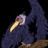 coolman avatar