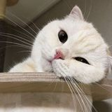 wiya avatar