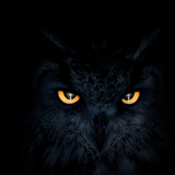BlackOwl avatar