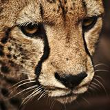 avto56 avatar