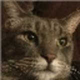 Matkil avatar