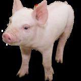 lilweaner avatar
