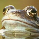 Frog_8 avatar