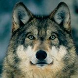 ElProRey008 avatar