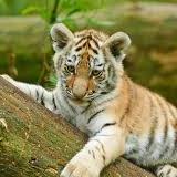 tigerboy5813 avatar