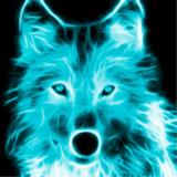 CyanFox avatar