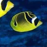 adrock777 avatar