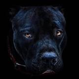 Storm163 avatar