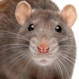 FuzzyRat avatar